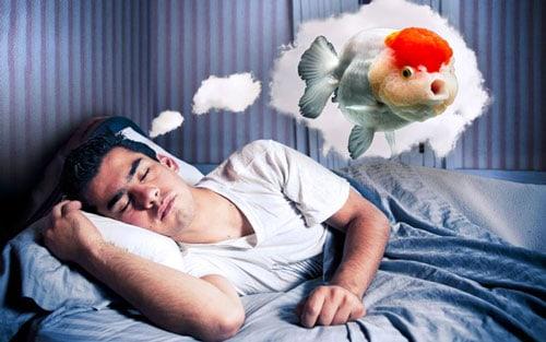 Nằm mơ thấy ăn cá đánh con gì và điềm lành hay dữ?