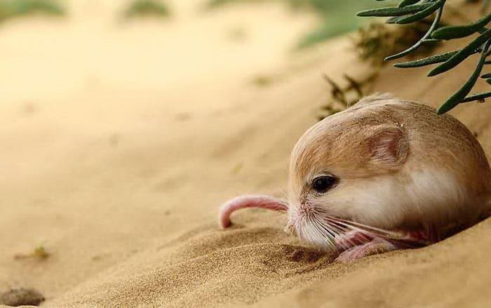 Nằm mơ thấy chuột đánh con gì và điềm báo gì?
