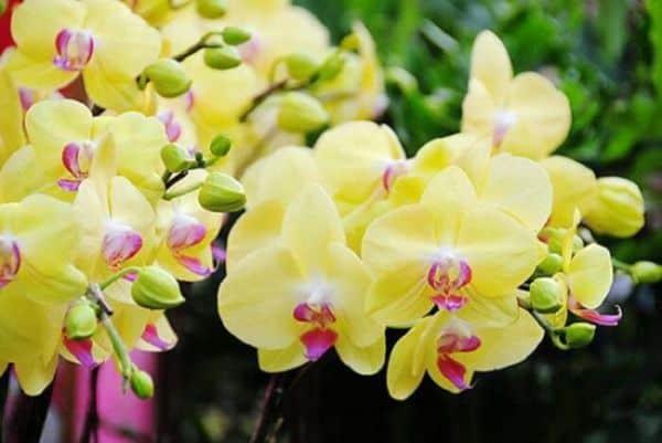 Diem bao giac mo thay hoa lan va con so lien quan?
